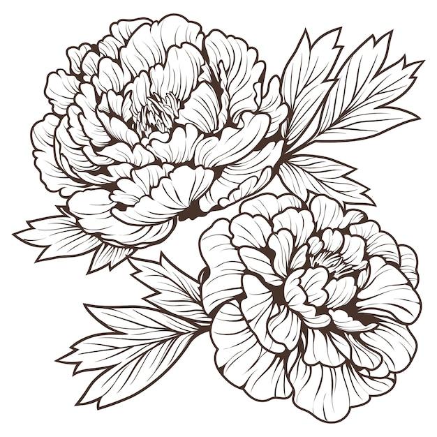 Doodle Art De La Belle Fleur De Pivoine Vecteur Premium