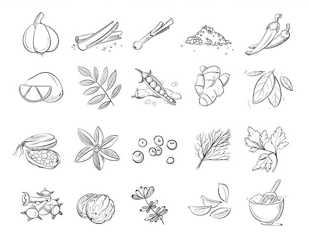 Doodle épices et herbes vectorielles jeu dessiné à la main Vecteur Premium