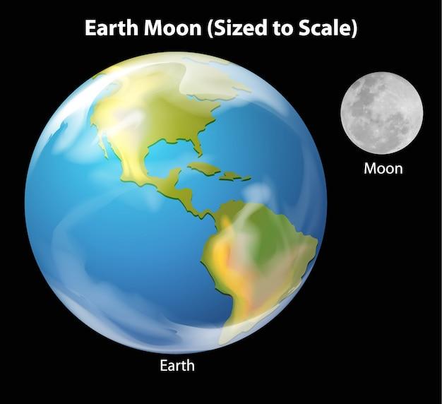Earth moon à l'échelle Vecteur gratuit