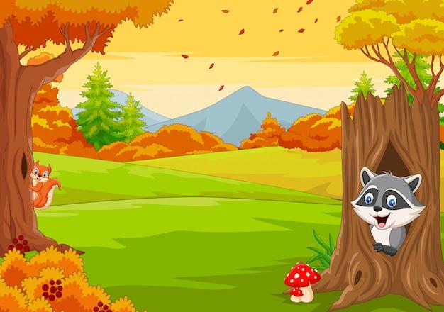 Écureuil de dessin animé avec raton laveur dans la forêt d'automne Vecteur Premium
