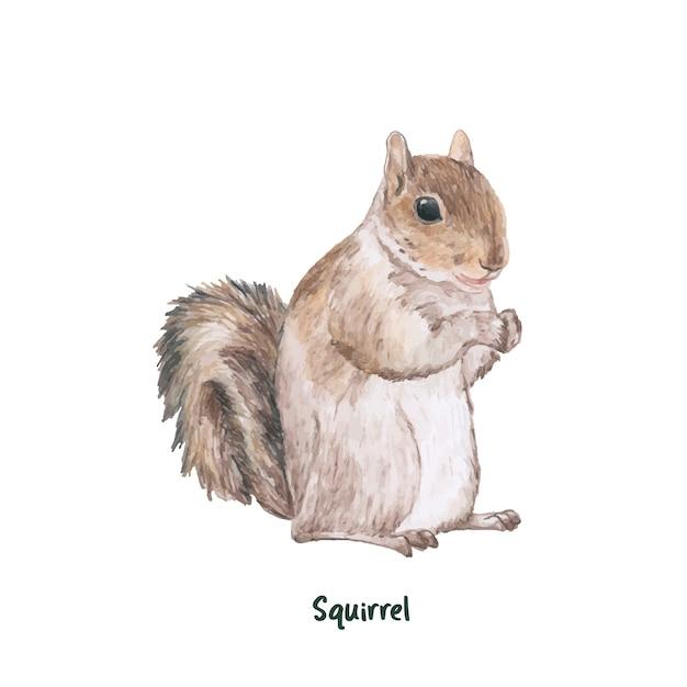 Écureuil dessiné main isolé sur fond blanc Vecteur gratuit