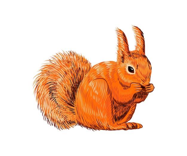Écureuil dessiné à la main mange des noix Vecteur Premium