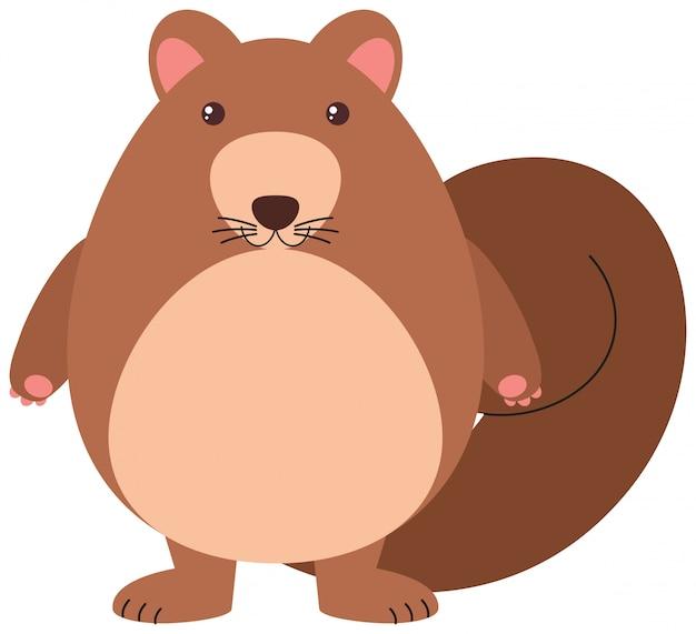 Écureuil mignon Vecteur gratuit