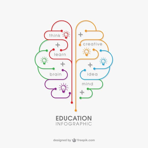 Education Infographie Vecteur gratuit