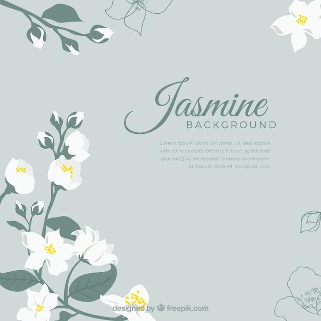 Élégant fond de jasmin avec un design plat Vecteur gratuit