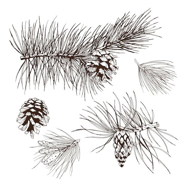 Élément de conception de branches de pin Vecteur gratuit
