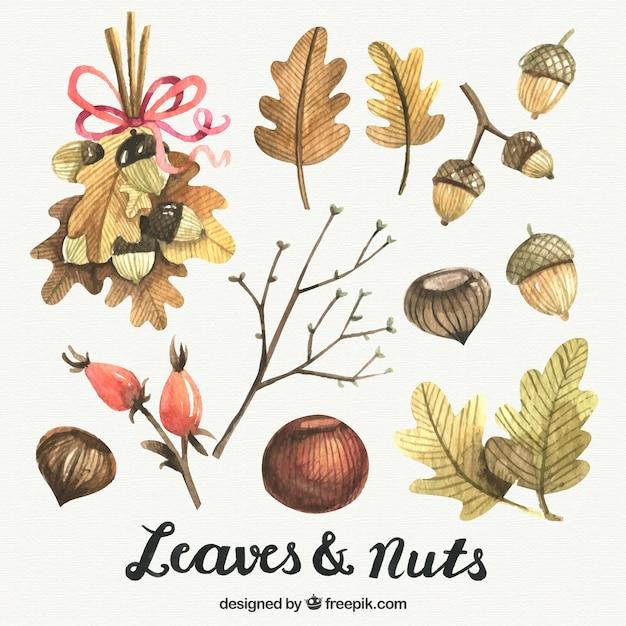 Éléments d'automne peints à l'aquarelle Vecteur gratuit