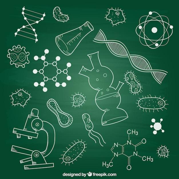 Éléments De Biologie Sur Tableau Noir Vecteur gratuit