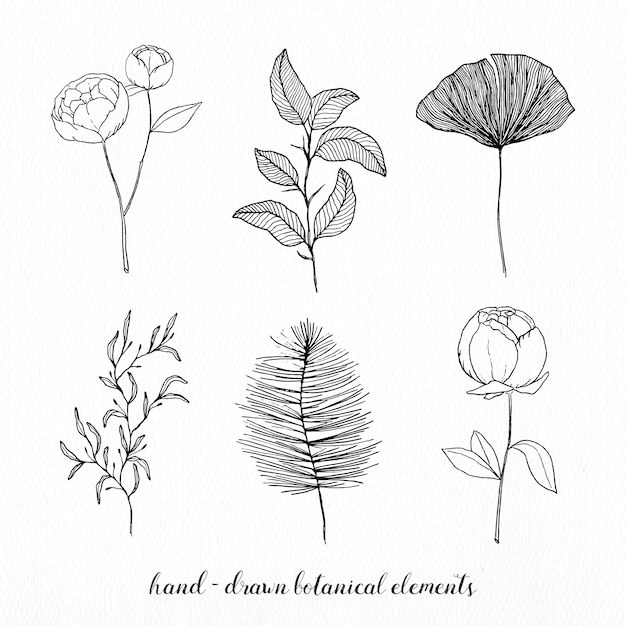 Éléments Botaniques élégant Dessinés à La Main Vecteur gratuit