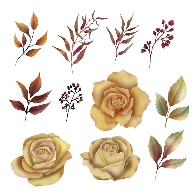 Éléments Floraux Aquarelle Vecteur Premium
