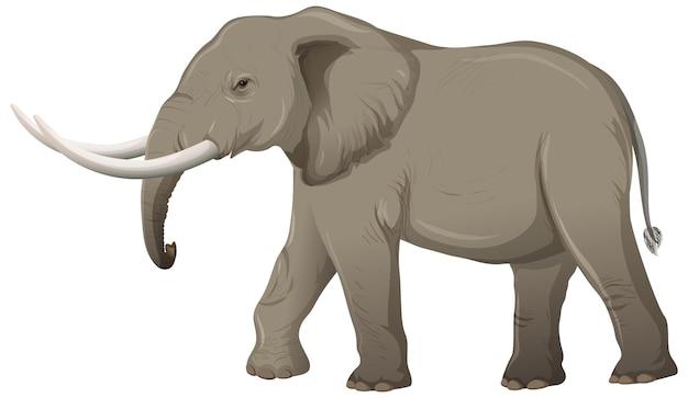 Éléphant Adulte Avec Ivoire En Style Cartoon Vecteur gratuit