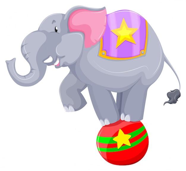 Éléphant gris en équilibre sur le ballon Vecteur gratuit