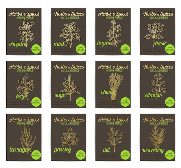 Ensemble D'affiches D'herbes Et D'épices Culinaires Dessinés à La Main. Vecteur Premium
