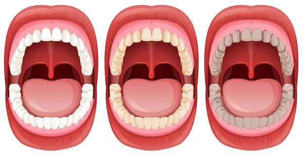 Un ensemble d'anatomie de la bouche humaine Vecteur gratuit