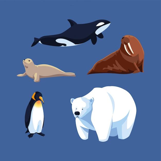 Ensemble D'animaux De L'arctique Vecteur Premium