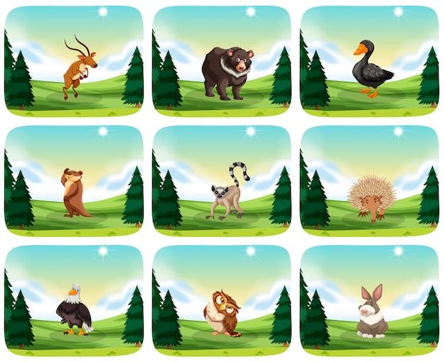 Ensemble d'animaux dans la nature Vecteur gratuit