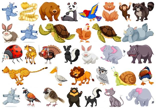 Ensemble d'animaux différents Vecteur Premium
