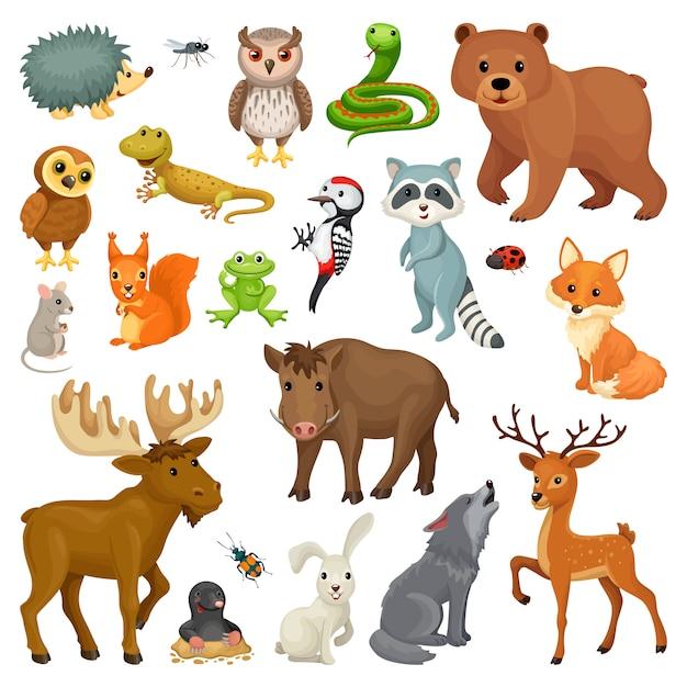 Ensemble d'animaux de la forêt et des oiseaux. Vecteur Premium