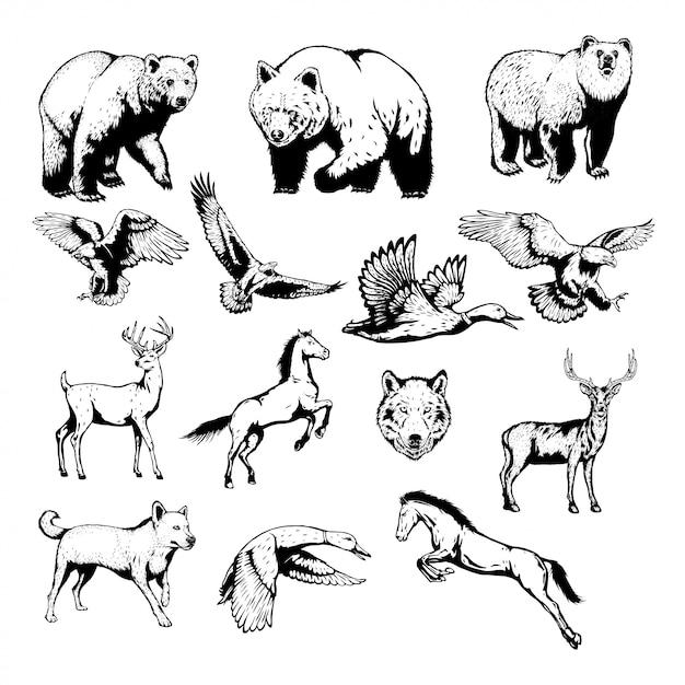 Ensemble d'animaux sauvages avec illustration vectorielle dessinés à la main Vecteur Premium