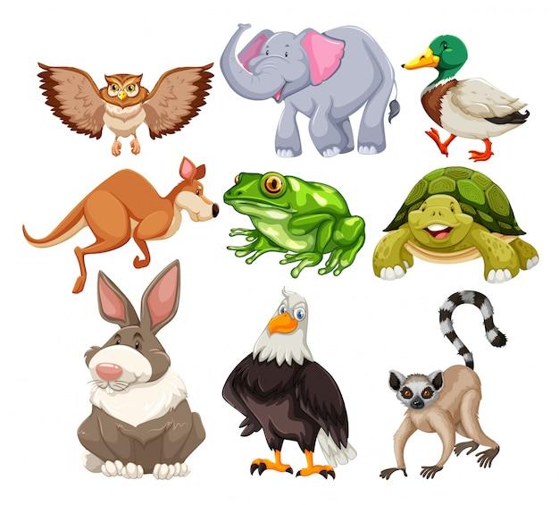 Ensemble d'animaux sauvages Vecteur gratuit