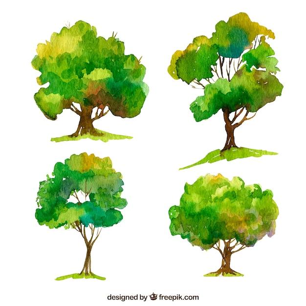 Ensemble D'arbres Dans Un Style Aquarelle Vecteur Premium