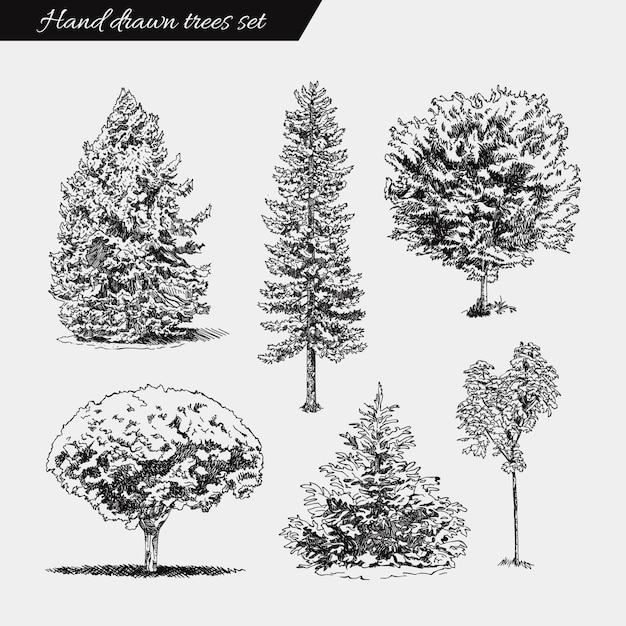 Ensemble d'arbres dessinés à la main. croquis dessin illustration Vecteur Premium