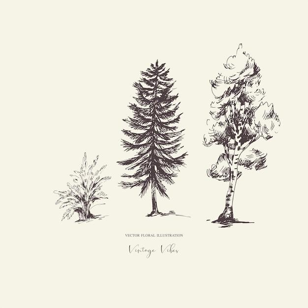 Ensemble D'arbres Evegreen Forêt Naturelle Vecteur Premium