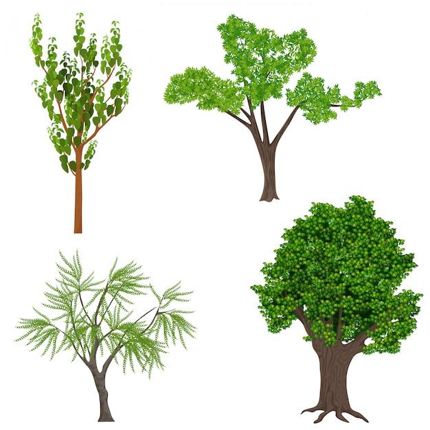 Ensemble d'arbres réalistes très détaillés Vecteur Premium