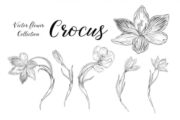 Ensemble D'arrangements Floraux Avec Des Fleurs De Crocus Vecteur Premium