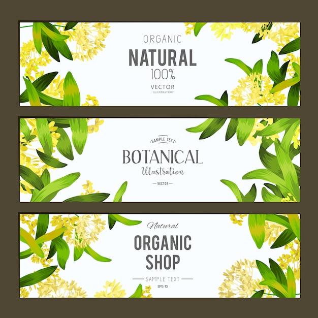 Ensemble de bannières de plantes et d'herbes. elément de design ou carte d'invitation Vecteur gratuit