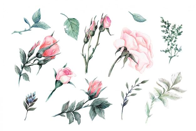 Ensemble de beaux éléments vectoriels réalistes de roses rouges Vecteur Premium