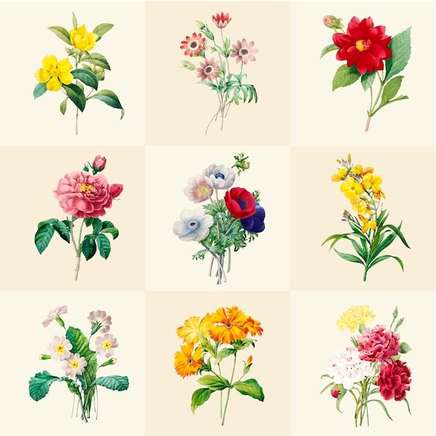Ensemble de belles fleurs sauvages en fleurs Vecteur gratuit