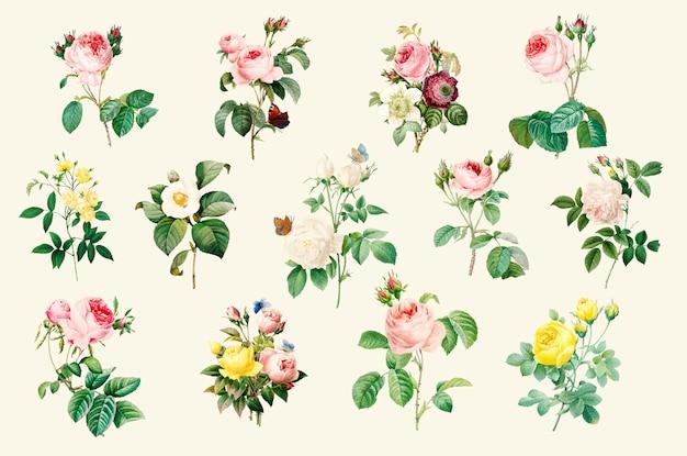 Ensemble de belles roses en fleurs Vecteur gratuit