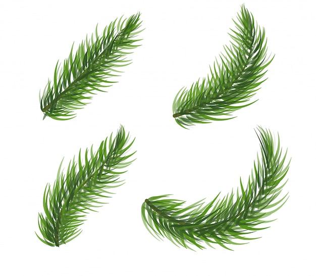 Ensemble De Branche D'arbre De Pin. éléments De Guirlande De Noël Sapin. Collection D'icônes De Plantes Conifères Sur Fond Blanc. Vecteur Premium