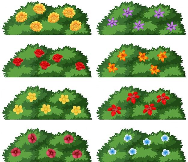 Ensemble De Buissons Avec Des Fleurs Vecteur gratuit