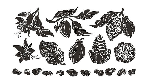 Ensemble De Cacao. Ingrédient Chocolaté. Croquis De Haricots, Fruits, Feuilles Vecteur Premium