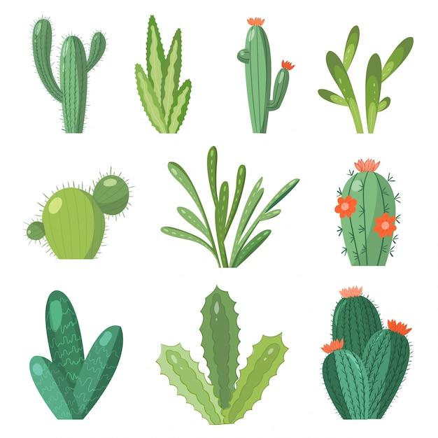 Ensemble De Cactus De Dessin Animé. Mettre Des Cactus Lumineux Et De L'aloès. Fleurs De Cactus Colorées Et Lumineuses Isolés Sur Blanc Vecteur Premium