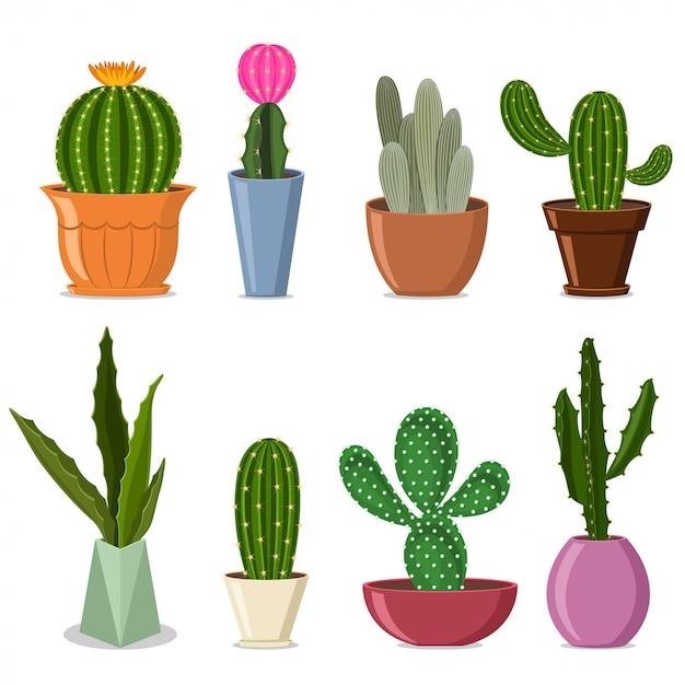 Ensemble De Cactus En Pots. Illustration Vectorielle De Plantes Décoratives Pour La Maison Avec Des Fleurs Isolées Vecteur Premium