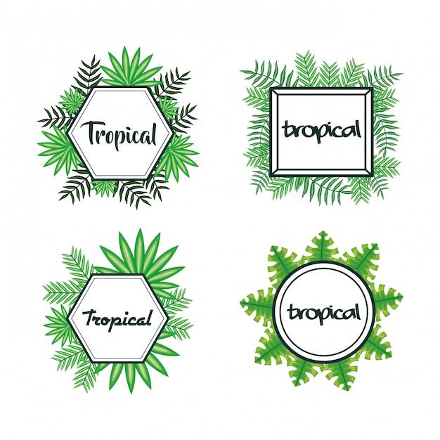 Ensemble de cadres avec feuilles tropicales Vecteur Premium