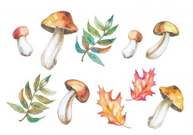Ensemble de champignons aquarelles et feuilles d'automne. Vecteur Premium