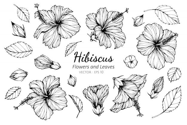 Ensemble de collection de fleurs d'hibiscus Vecteur Premium