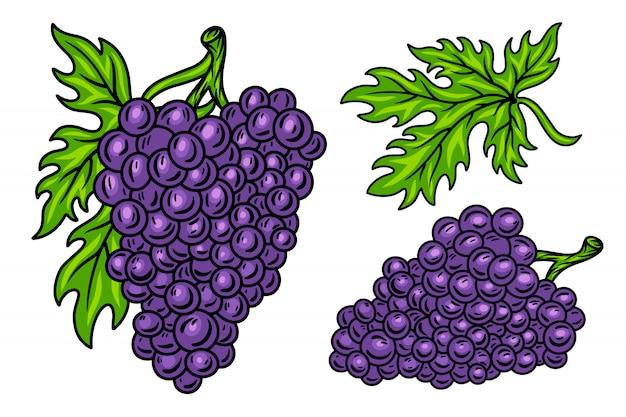 Ensemble coloré de vigne grappe de raisin rétro vintage avec des feuilles Vecteur Premium