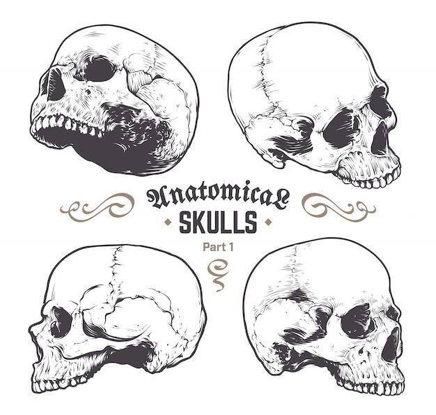 Ensemble de crânes dessinés à la main Vecteur gratuit