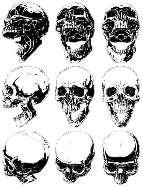 Ensemble De Crânes Humains Réalistes Noirs Et Blancs Vecteur Premium