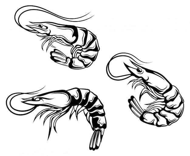 Ensemble De Crevettes. Collection De Crevettes Roses En Coquille. Habitants Marins Vecteur Premium