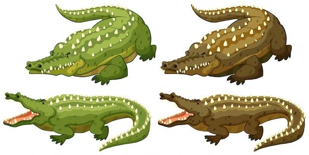 Ensemble de crocodiles verts et marrons Vecteur gratuit