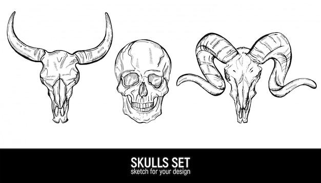 Ensemble De Croquis De Crânes Humains Et Crânes D'animaux. Vecteur Premium