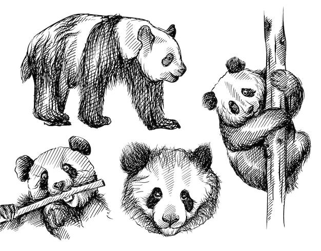 Ensemble De Croquis Dessinés à La Main D'ours Panda Sur Fond Blanc. Vecteur Premium