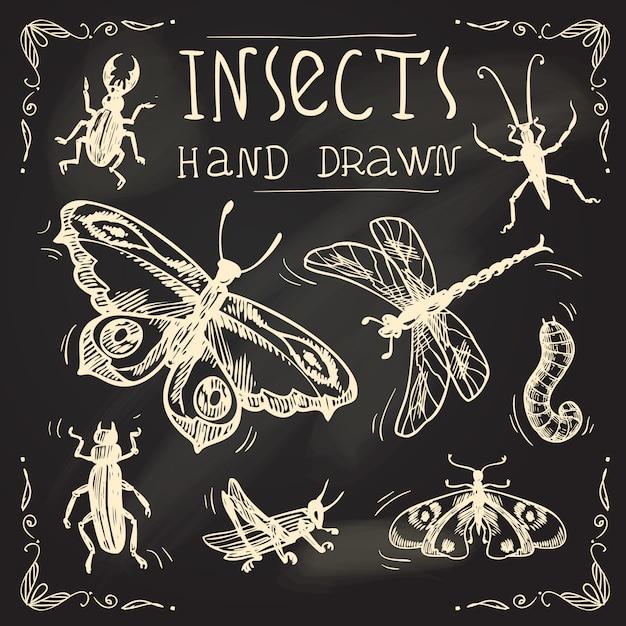 Ensemble de croquis d'insectes Vecteur Premium