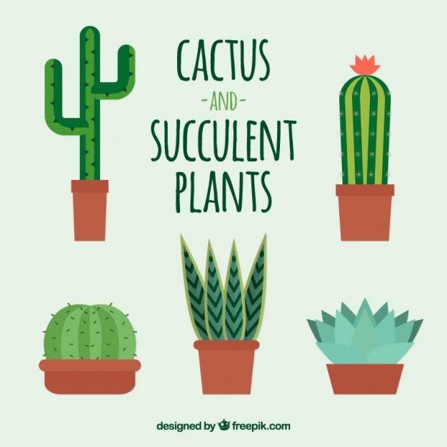 Ensemble De Cactus Mignon Design Plat Tlcharger Des Vecteurs
